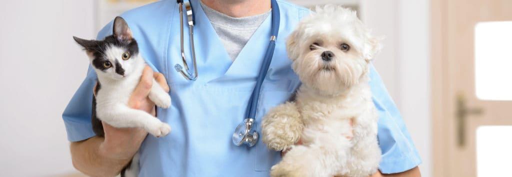Malpraxisul Veterinar
